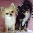 ピコ&ミニー